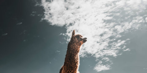 Alpacaのデモサイトをリニューアルしました。
